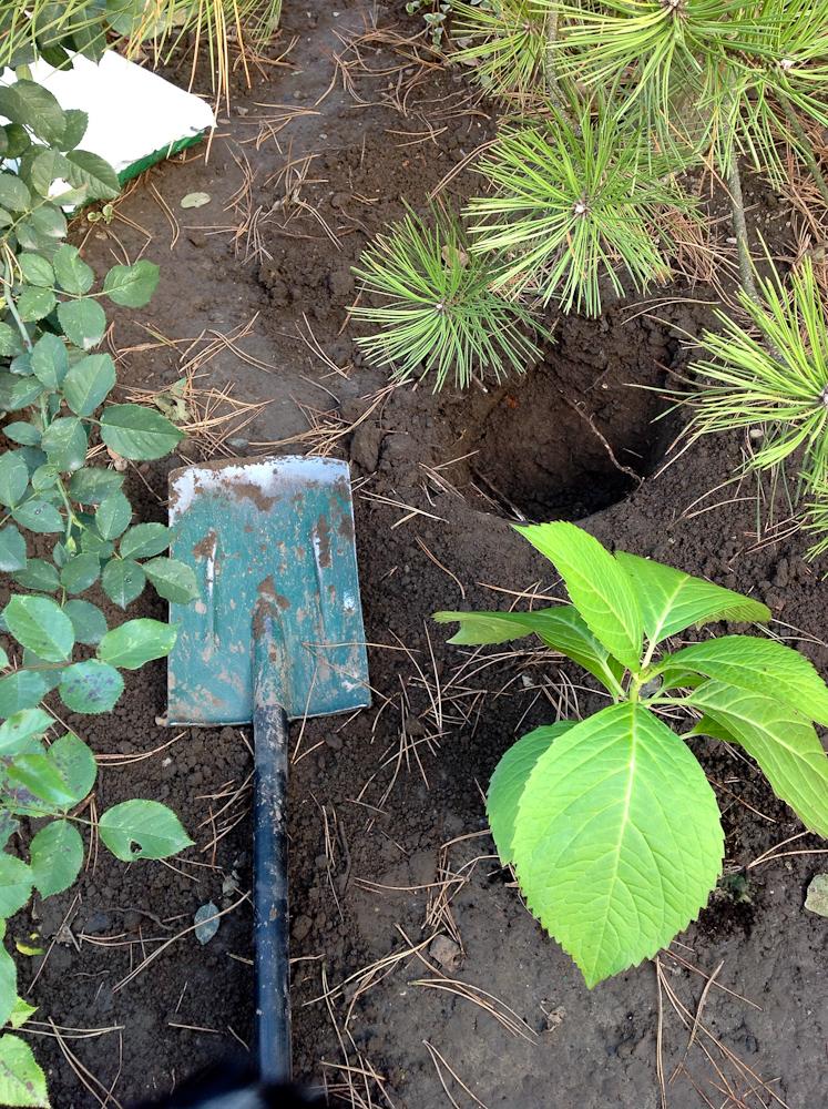 sadzenie to końcowy etap prac