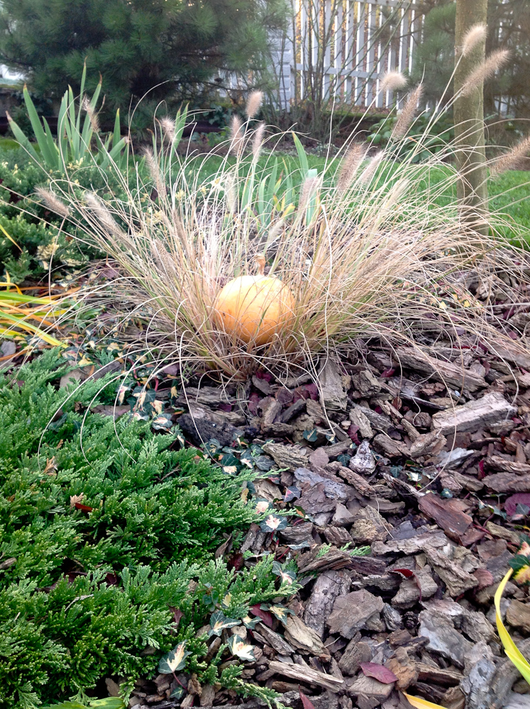 wymrożona środkiem rozplenica, stała się na jesieni miejscem dla dyni