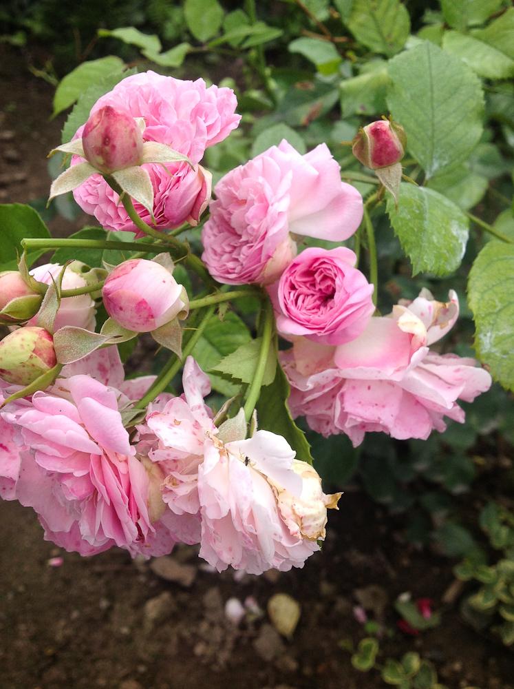 kwiaty zebrane w grona