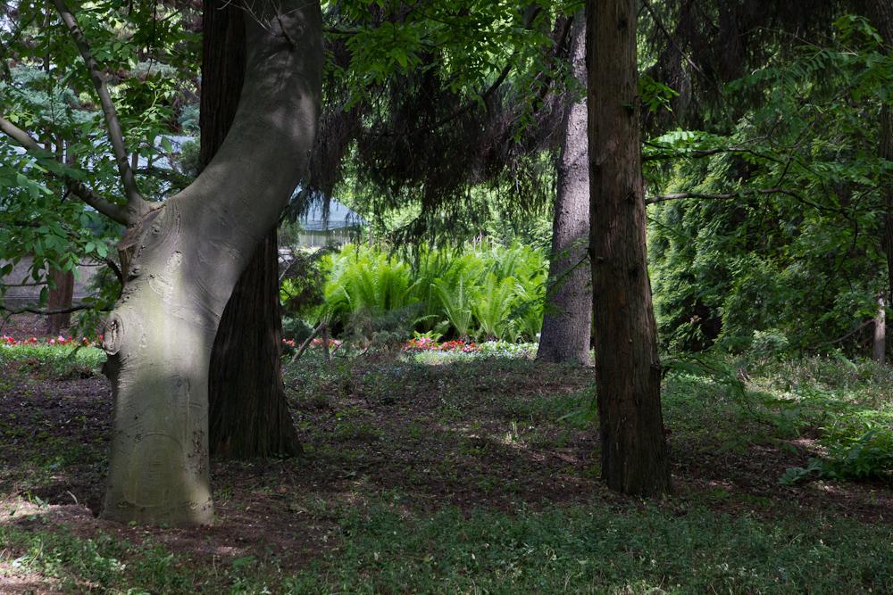 drzewa w ogrodzie