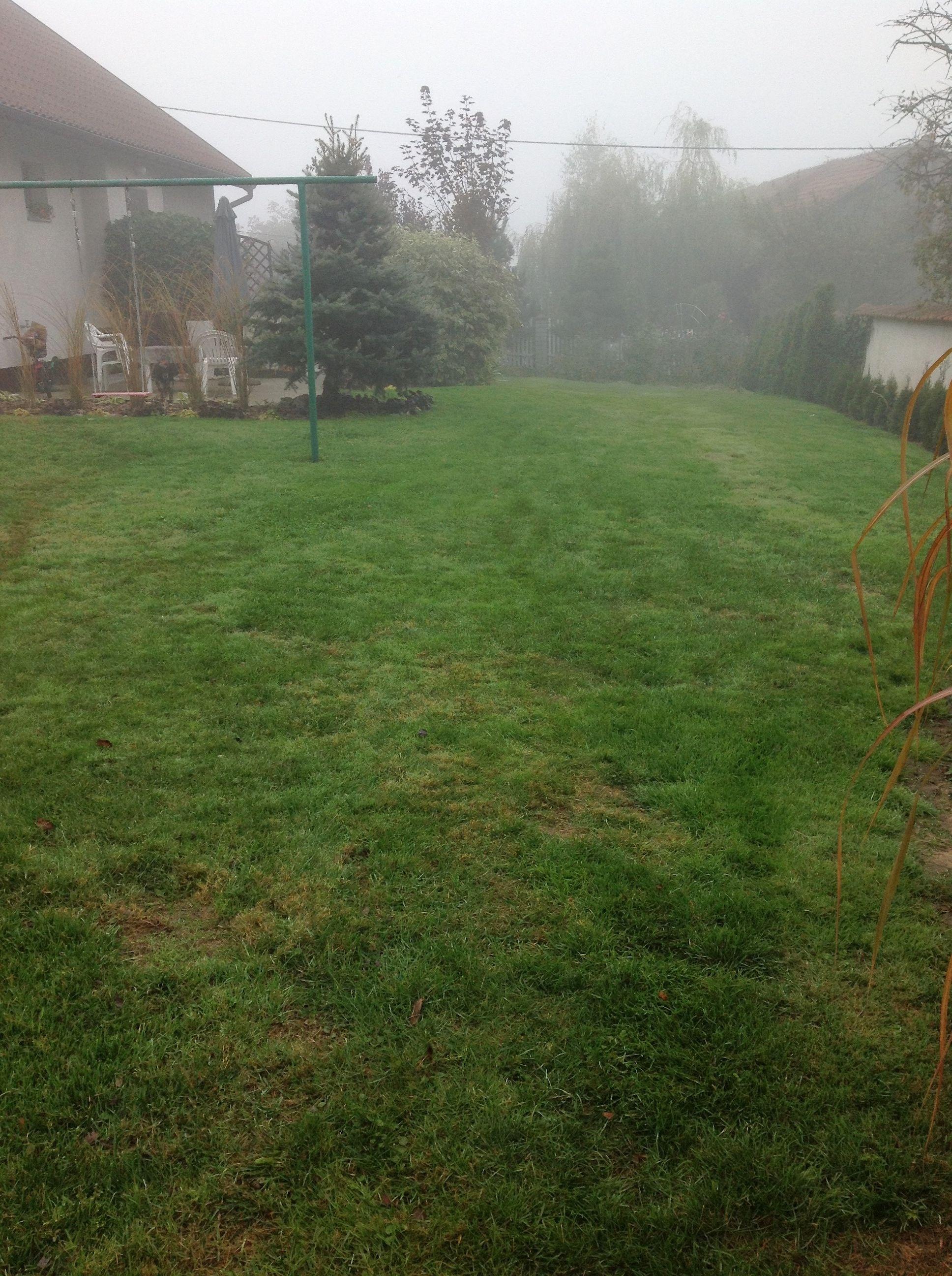 Ogród spowity poranną mgłą