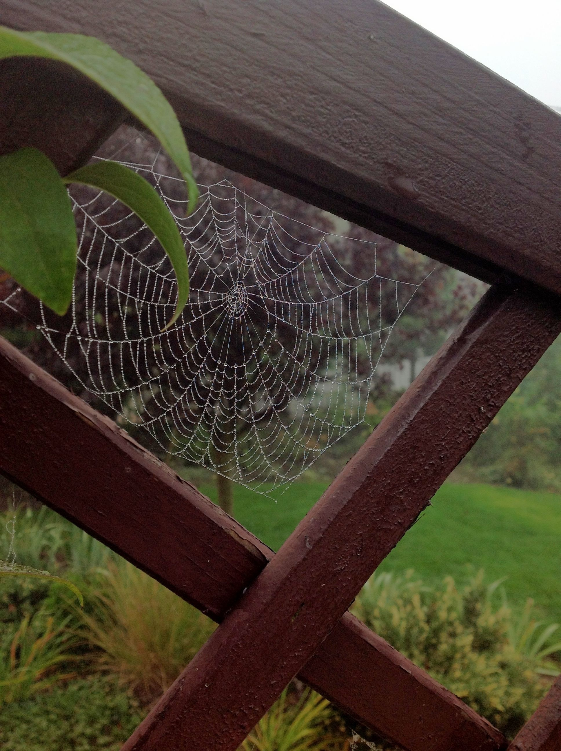 Misterne dzieło pająka
