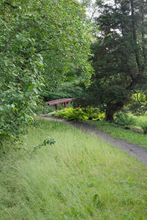 ścieżka wiodąca między drzewami i krzewami