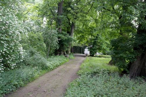cienisty zakątek pod koronami starych drzew