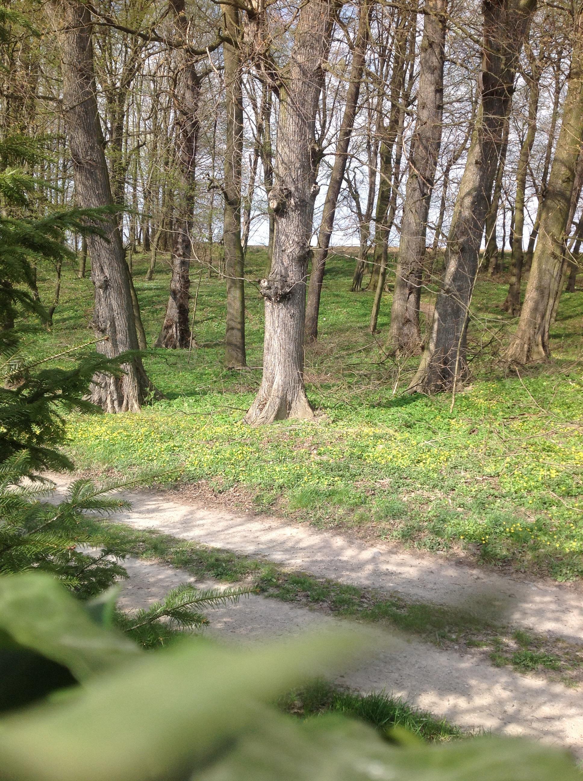 imagestare drzewa za ogrodzeniem