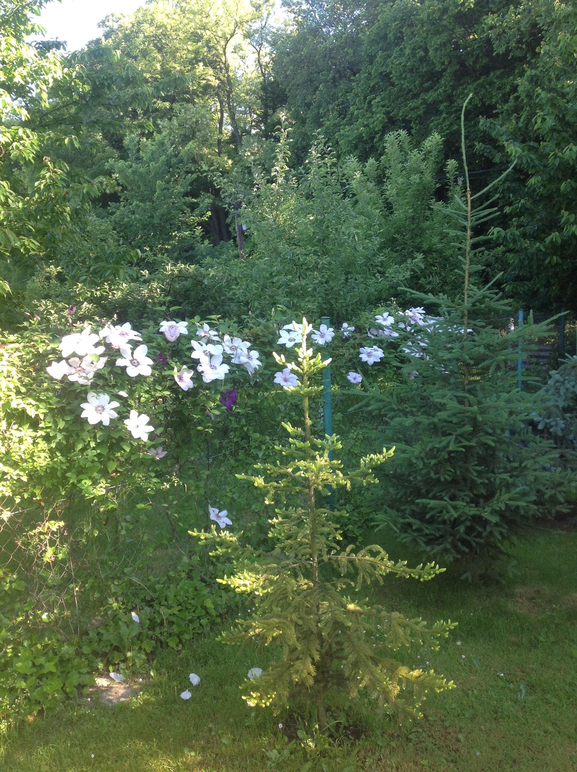 To tylko część z długiego odcinka porośniętego tymi ciekawymi roślinami.