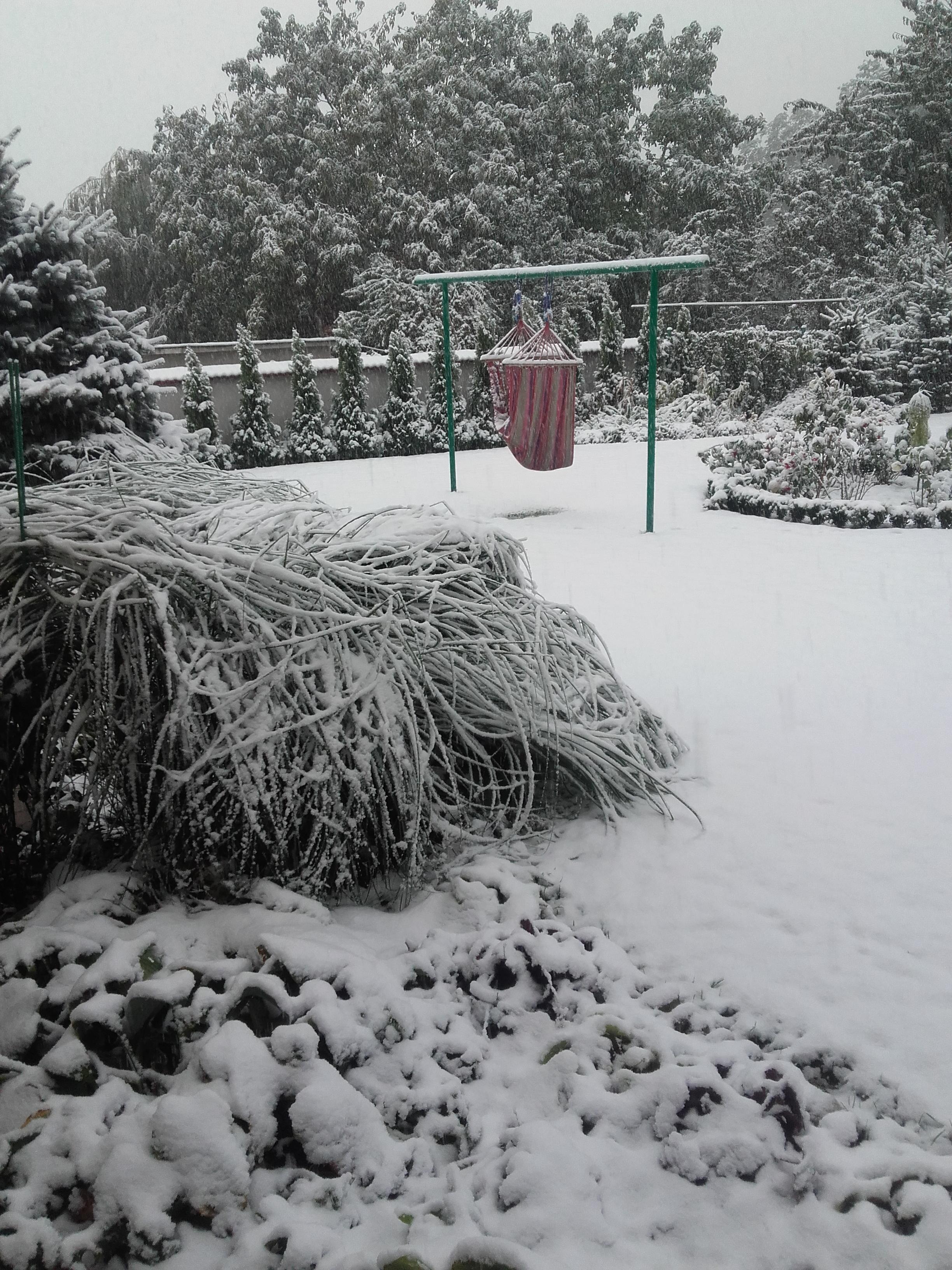 Zaskakujące, jesienne opady śniegu powaliły miskanty i zasypały hamak
