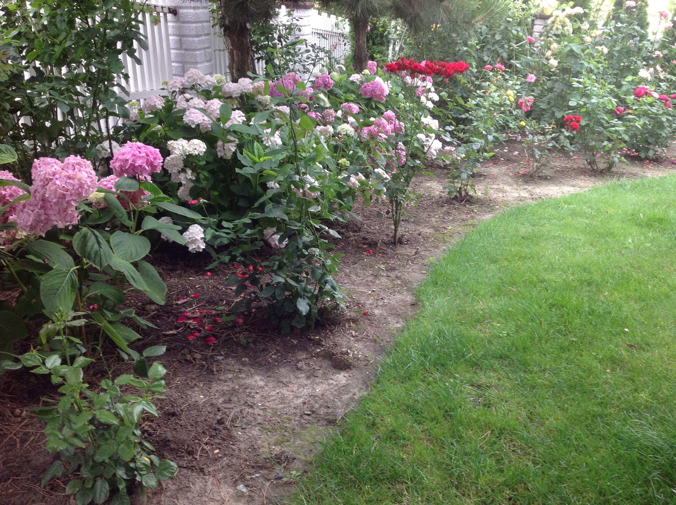 róże z hortensjami