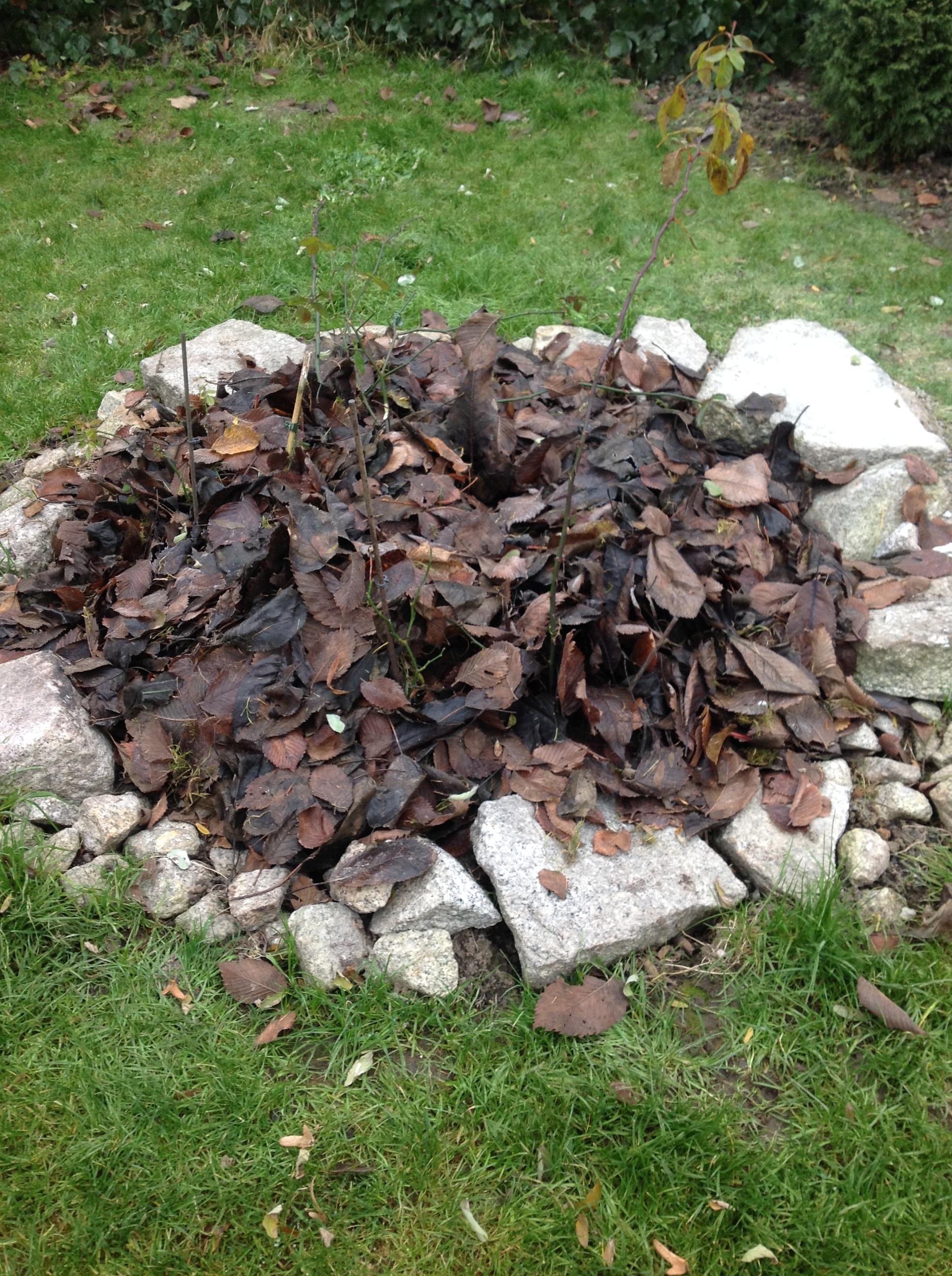 młode rośliny przykryte liśćmi