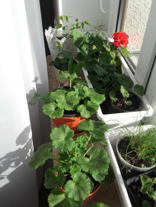 parapet ogrodnika